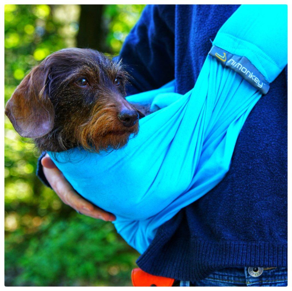 Trageschlinge für kleine Hunde