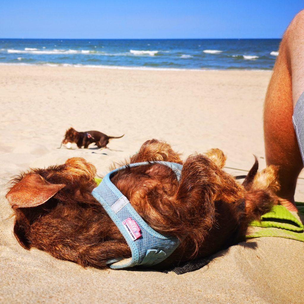 Hundeurlaub Holland